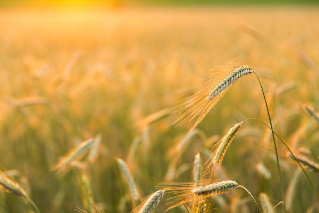 Landschapsfoto van een aren veld in het Montferland van Natuurlijk Achterhoek
