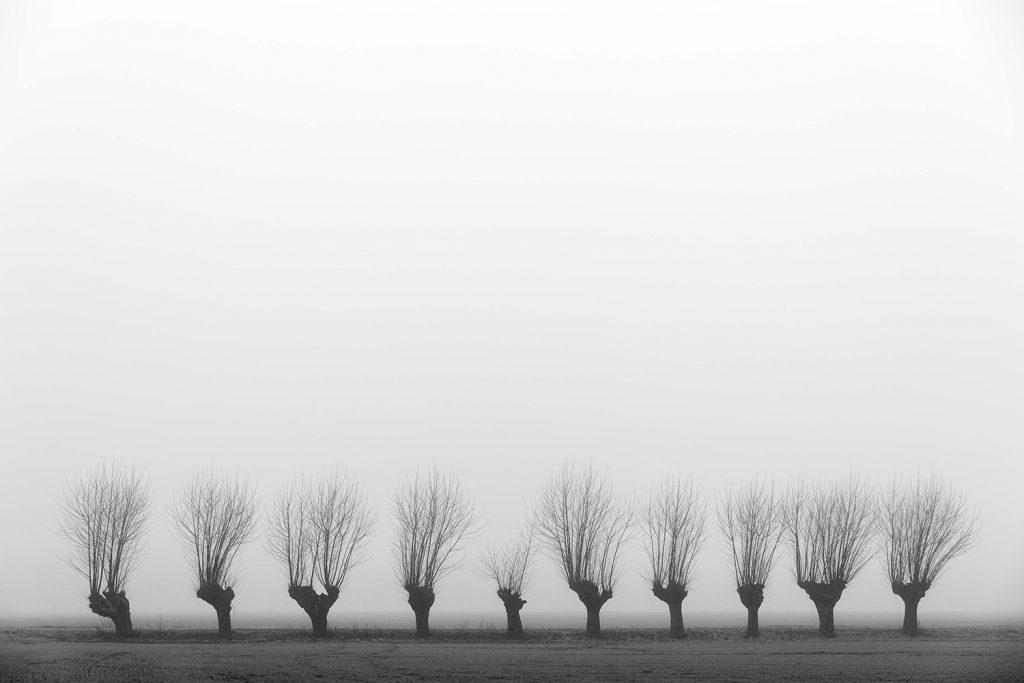 Landschapsfoto van een rij knotwilgen vlakbij Netterden in de Achterhoek