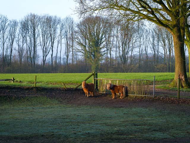 Natuurlijk Achterhoek, gemeente Berkelland, Rekken